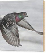 Rock Dove In Flight Wood Print