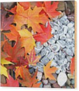 Rock Garden Autumn Leaves Wood Print