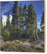 Rock Garden Wood Print