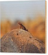 Rock Lizard Wood Print