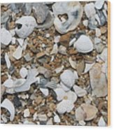 Rock N Shells Wood Print