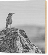 Rock Wren 2bw Wood Print