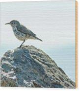 Rock Wren  Wood Print
