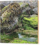 Rockpool Wood Print
