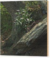 Rocks And Rhododendron At Chimney Rock Wood Print