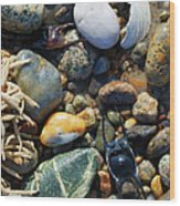 Rocks And Shells Wood Print
