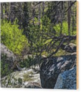 Rocks Water And Knarly Branches Wood Print