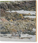 Rocky And Sandy Beach Wood Print
