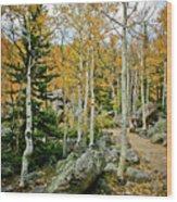 Rocky Mountain Aspens Wood Print