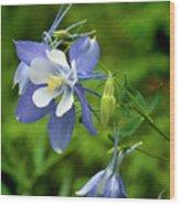 Rocky Mountain Blue Columbine Wood Print