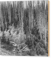 Rocky Mountain High Elevation Forest Large Panorama Wood Print
