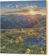 Rocky Mountain National Park Summer Sunflowers Pano 1 Wood Print