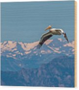 Rocky Mountain Pelican Wood Print