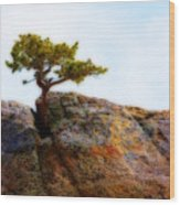 Rocky Mountain Tree Wood Print