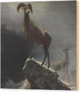 Rocky_mountain_sheep_or_big_horn,_ovis,_montana Wood Print