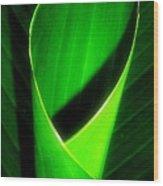 Rolled Canna Leaf Wood Print by Beth Akerman