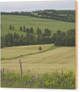 Rolling Farmland Stretches Wood Print