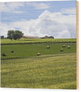 Rolling Green Hills With Trees Wood Print