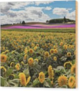 Rolling Hills Of Flowers In Summer Wood Print
