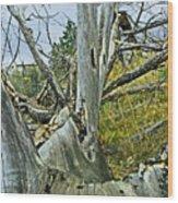 Rolling Log Wood Print