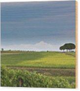 Rolling Tuscany 2 Wood Print by Patrick English