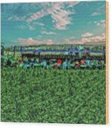 Romaine Lettuce Harvest Wood Print