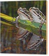 Romance Amongst The Frogs Wood Print