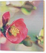 Romancing Spring II Wood Print