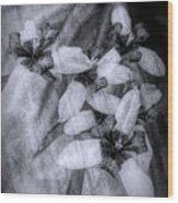 Romantic Island Iris In Black And White Wood Print