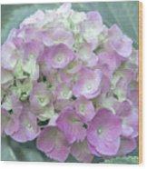 Romantic Pink Hydrangea Wood Print