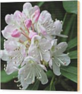 Romantic Rhododendron Wood Print