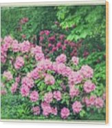 Romantic Rhododendrons Wood Print