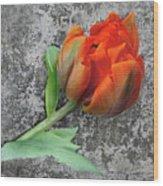 Romantic Tulip Wood Print