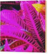 Romney Pink Wood Print