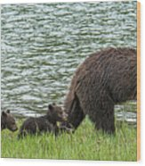 Romping By The Lake With Mama Bear Wood Print