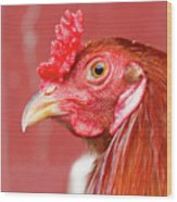 Rooster Close-up On A Reddish Background Wood Print