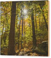 Rooster Comb Trail Wood Print