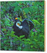 Rooster Grouse Posing Wood Print