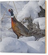 Rooster In The Snow Wood Print
