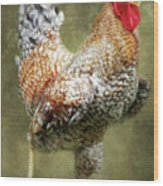 Rooster Jr. Strut Wood Print