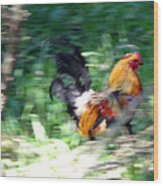 Rooster On The Island Wood Print
