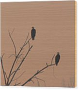 Roosting Bald Eagles Wood Print
