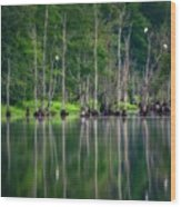 Roosting Egrets Wood Print