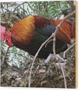 Roosting In San Juan Wood Print