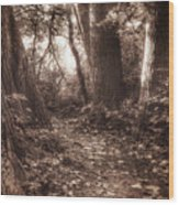 Rooted Wood Print