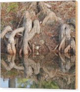 Rooted Reflections Wood Print