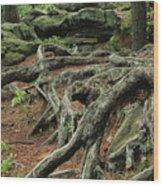 Roots On The Forest Floor Wood Print