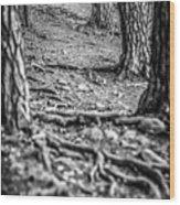 Rootway 2012 - Black Edition Wood Print