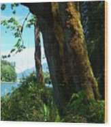 Rope Swing Wood Print