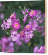 rosa 'Daydream' 1762 Wood Print